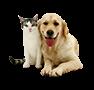Animales/Mascotas